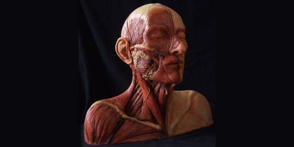 Kyusho: Anatomical Targets in Deep Tissue